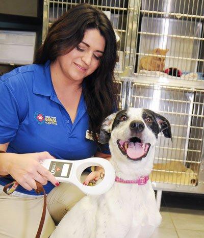 Tampa Bay Animal Hospitals   Tampa, FL