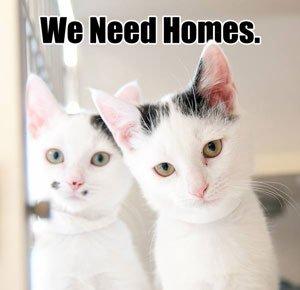 we_need_homes