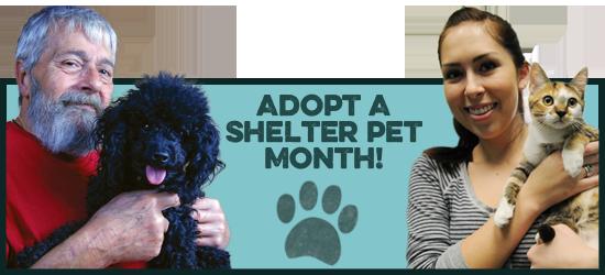 Adopt a Shelter Pet Month