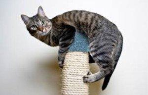 Cat-scratch_toy