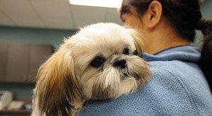 Sick Puppy | Tampa Bay Animal Hospitals | Tampa, FL