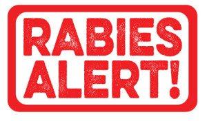RABIES ALERT | Tampa Bay Animal Hospitals | Tampa, FL