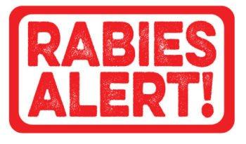 RABIES ALERT   Tampa Bay Animal Hospitals   Tampa, FL