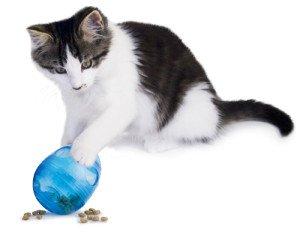 Obese Cats   Tampa Bay Animal Hospitals
