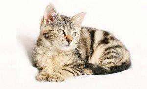 Preventative healthcare for cats | North Bay Animal Hospitals | Tampa, FL