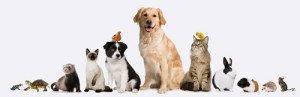 International Pet Travel | Tampa Bay Animal Hospitals | Tampa, FL