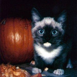 Happy Halloween | Tampa Bay Animal Hospitals