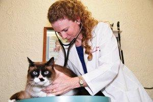 Dr. Christine Simon   Tampa Bay Animal Hospitals   Tampa, FL