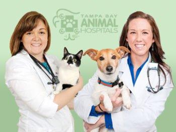 Dr. Laura Savarese, Dr. Kelleen Madill | Tampa Animal Hospitals