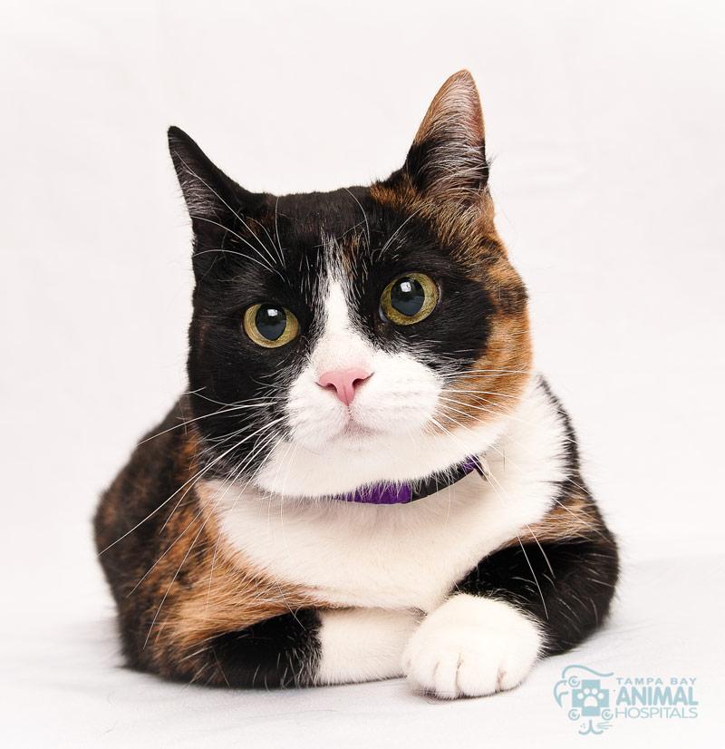 4 Dangerous Myths Pet Parents Believe About Cat Health