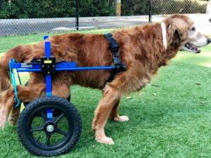 pet physical rehabilitation