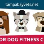 Senior Pet Fitness Class