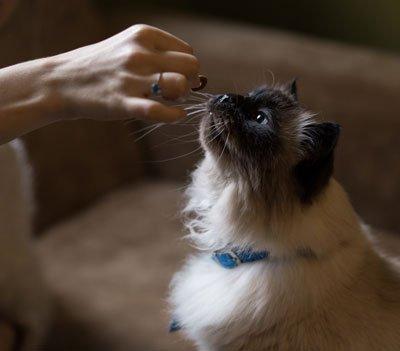 Feeding Cats – Addressing Behavioral Needs