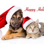 Not-So Holly Jolly Holiday Hazards