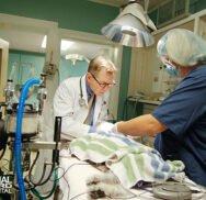 Emergency & Critical Care