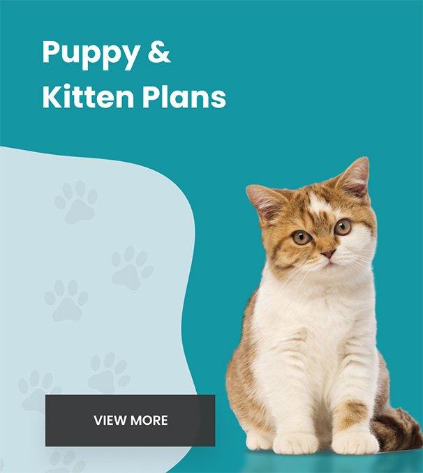 Puppy & Kitten Petly Plans