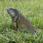 New Rules Regarding Reptiles